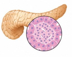 Research, Researchers, Results! Pancreatic Cancer