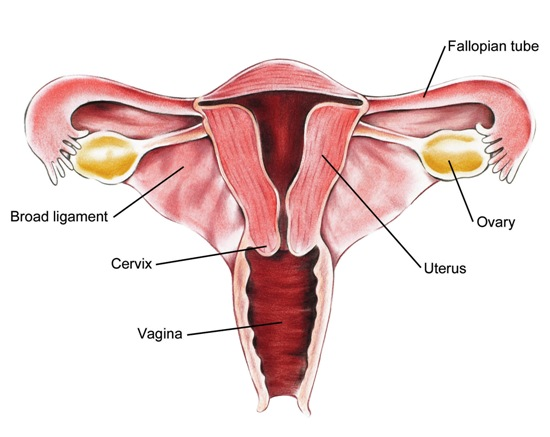 myths associated with ovarian cancer