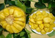 Is jackfruit a Powerful Cancer Killer